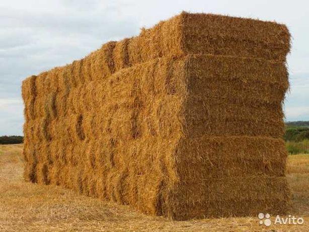 Солома пшеничная в тюках оптом от 30шт.
