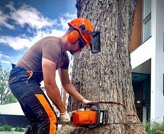 Wycinka drzew / czyszczenie działek. SZYBKO, SPRAWNIE, bezproblemowo