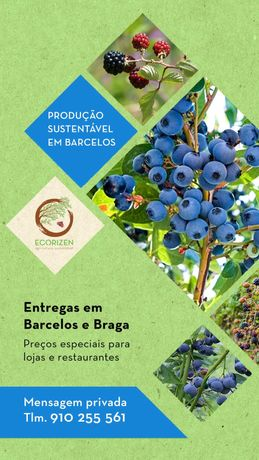 Amoras e Mirtilos - Agricultura Sustentável