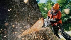Спил деревьев, хорошая цена!культивация участков огородов!