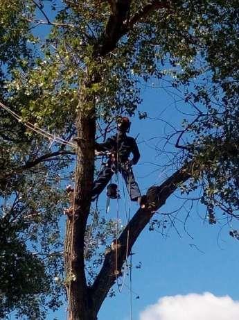 СПИЛ деревьев, АЛЬПИНИСТЫ, обрезка веток.Днепропетровск и пригород
