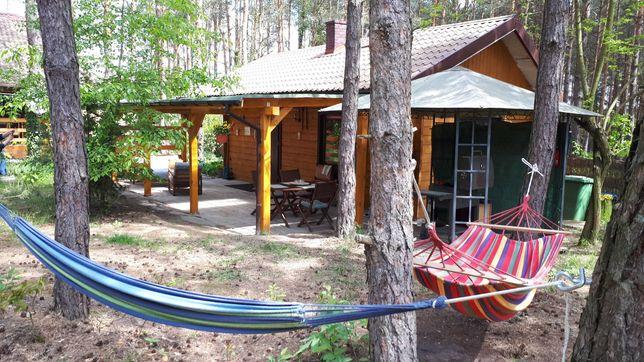 Domek rodzinny całoroczny w lesie nad jeziorem