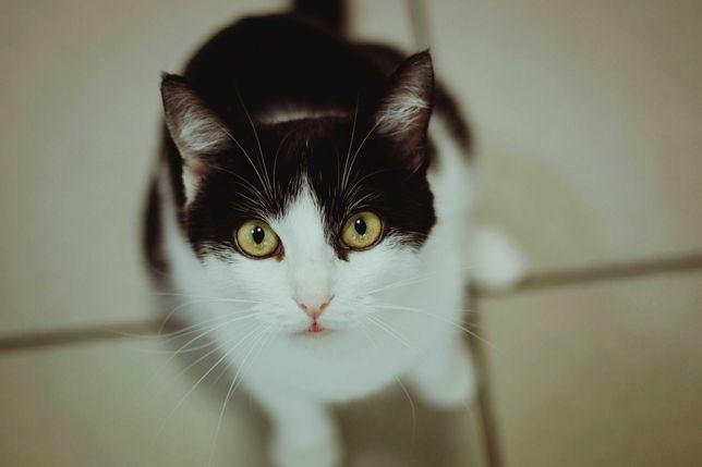 Cudna koteczka Charlie szuka domu