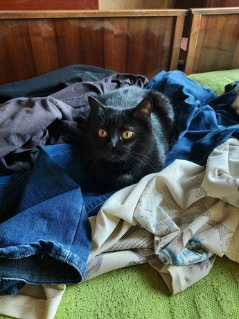Отдам черную кошку, 2 года,стерилизована