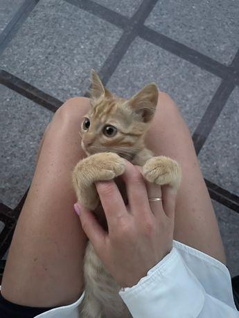 Котик в добрые ручки