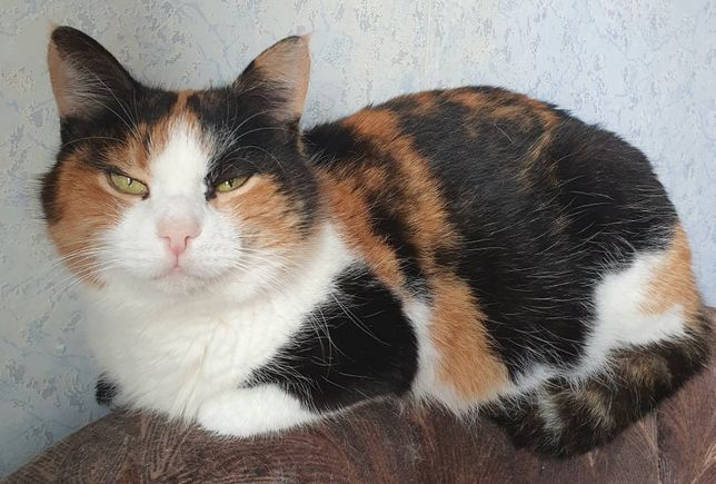 Котенок 7 мес игривый ласковый котик. Котики, котята, кошечка