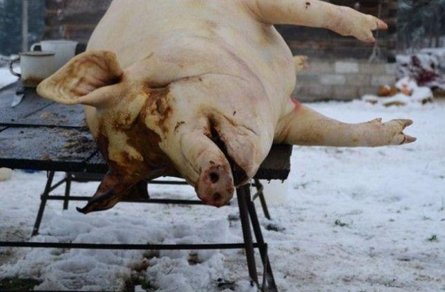 Забой свиней,овец,коз,телят,коней дорез скота,разделка обвал тушки