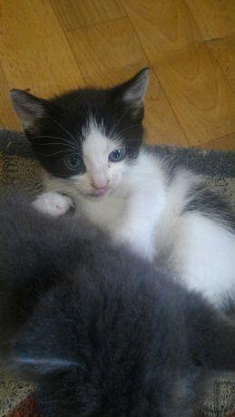 Малышка самый милый и нежный котенок ищет дом