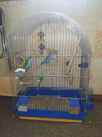 Волнистые попугаи вместе с клеткой