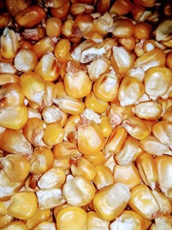 Kukurydza sucha 2020 , Ziemniaki