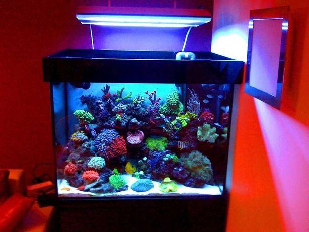 Koralomania.com zakładanie serwis sklep