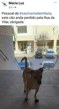 Cão perdido em São Mamede Infesta