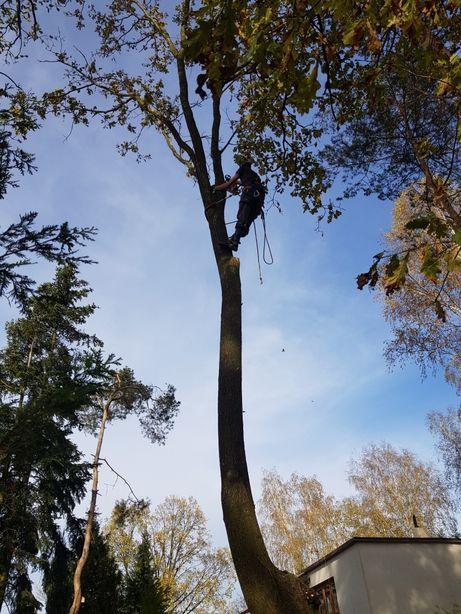 Wycinka drzew przycinka karczowanie działek rębak frezarka