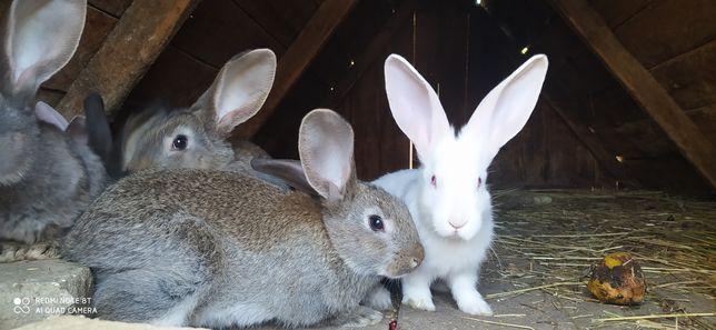 Продам кроликов разных возрастов (60 грн за месяц)
