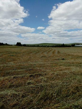 Serpa Terreno 4 hectares