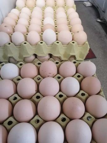 Jajka Wiejskie Świeże Wolny Wybieg  0,65gr sztuka Promocja na Święta!