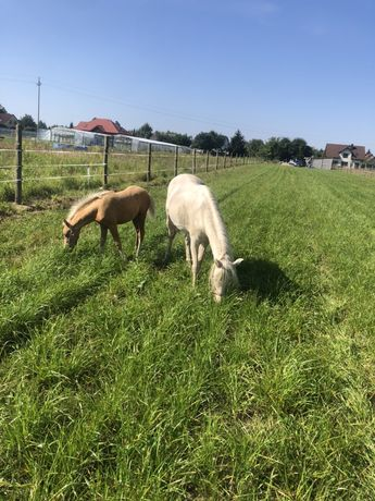 Obornik koński zamienie na siano / słome/ owiec / merchewke / buraki