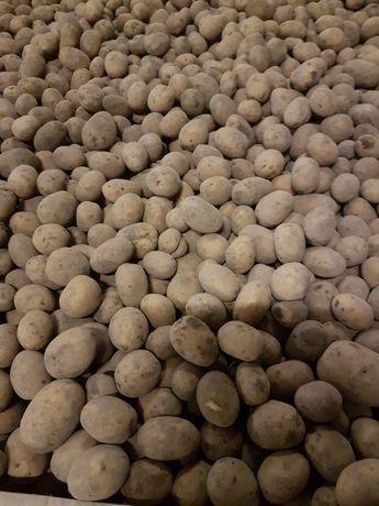 Ziemniaki Ignacy Madeira Arizona Sifra