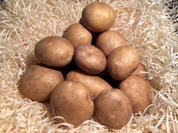 Продам посадочную картошку