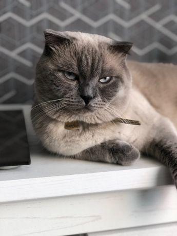 Кот МАРСЕЛЬ!!! Очень серьезный опытный приглашает кошечку в гости.