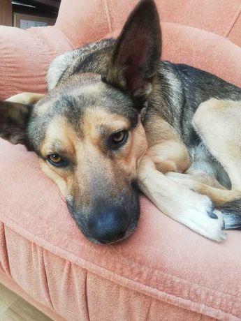 Meli - 1,5 roczny pies do adopcji