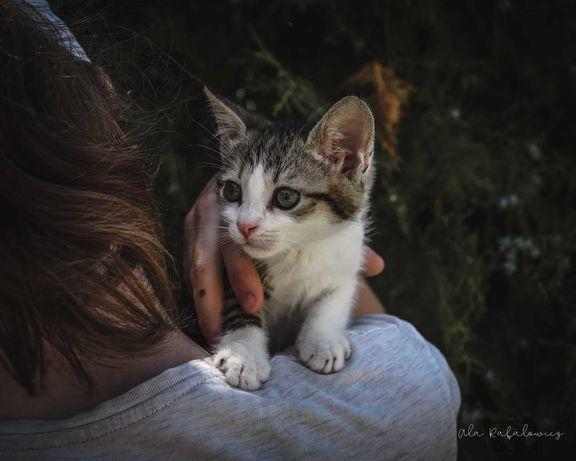 Malutki Messenger szuka domu! Adoptuj!