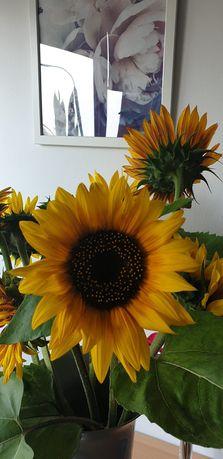Sprzedam kwiat cięty słonecznika ozdobnego