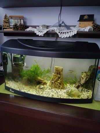 Akwarium panoramiczneg