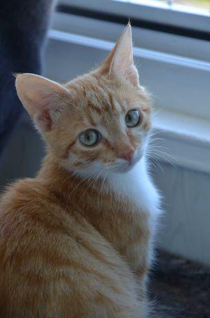 Кот Жулик (з мес) ищет постоянный дом и работу котом