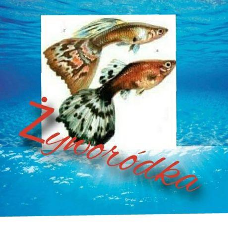Ryby akwariowe z własnej hodowli i nie tylko