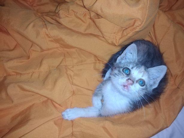 Adoção responsável bebe Gatinho menino 2 meses muito meigo e fofinho