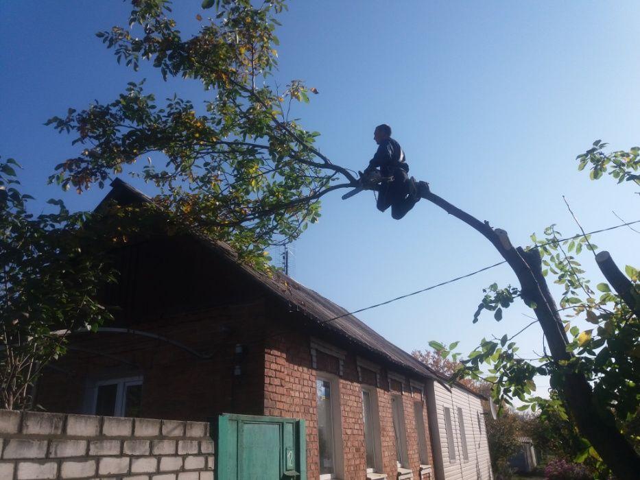Спил любых деревьев профессионалами.! Расчистка участков с вывозом.! Харьков - изображение 1