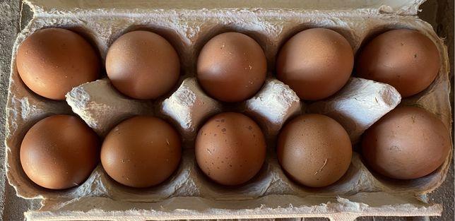 Jajka wiejskie od mlodych kur