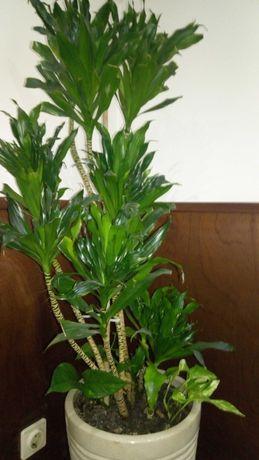 Vaso com planta de interior