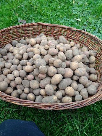 Продам дрібну домашню картоплю