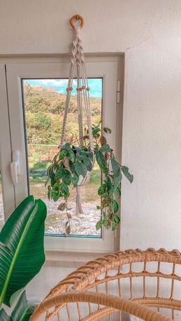 Suporte para plantas macrame