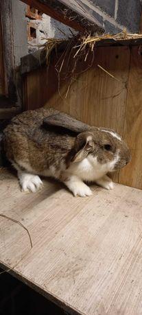 Sprzedam króliki tanio!!