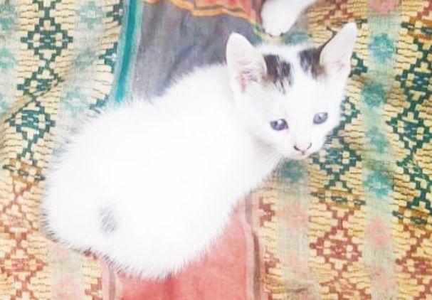 Кошеня - хлопчик
