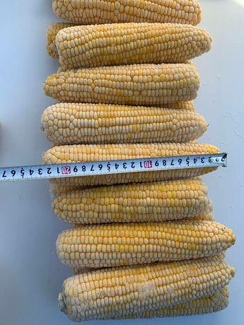 Кукуруза,заморозка, початок,Сладкая.