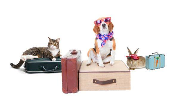 Pet sitter-cuidador de pequenos animais (m/f)