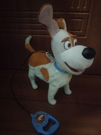 Интерактивная собака Джек Рассел Макс.