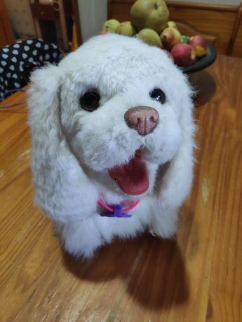Gogo cão de brincar