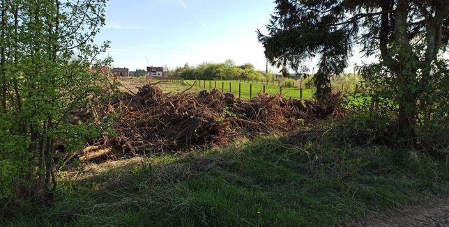 Za darmo do oddania korzenie konary karpy drzew duża ilość