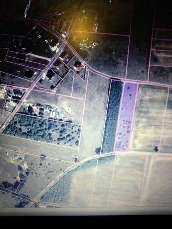 Działka 0,5 ha z warunkami zabudowy