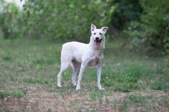 Отдам в хорошие руки уникальную собаку Скайлор.