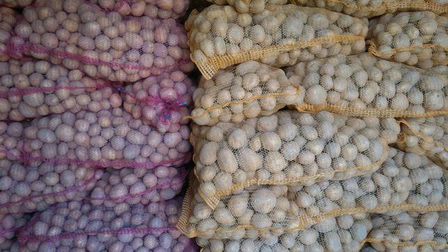 Ziemniaki jadalne Gala Vineta