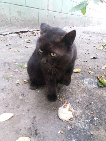 Котик Сёмик остался без хозяина