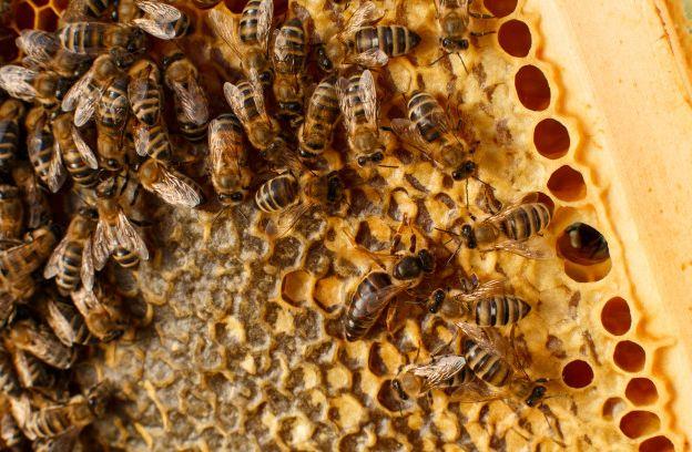 Продам бджоли з вуликами, бджолосім'ї; Продам пчелы, пчелосемьи