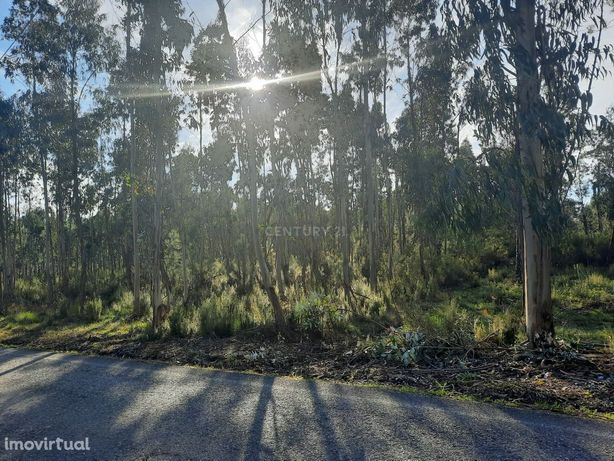 Terreno para exploração florestal
