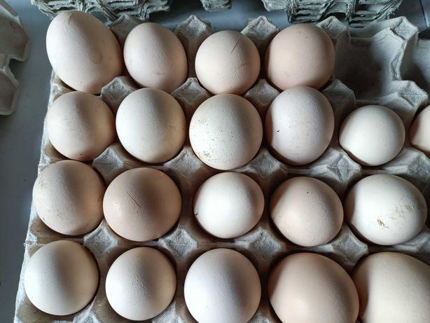Jajka wiejskie 7 zł za 10 sztuk
